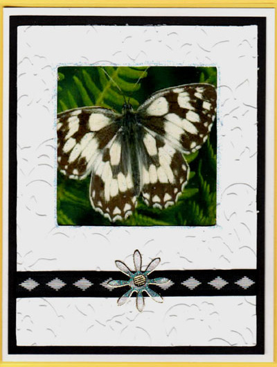 Butterfly Frames Acetate Card Set - Click Image to Close