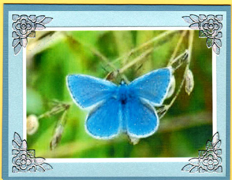 Butterfly Scenes Acetate Card Set - Click Image to Close